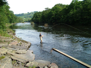 Playing a salmon on the upper Wye near Erwood.